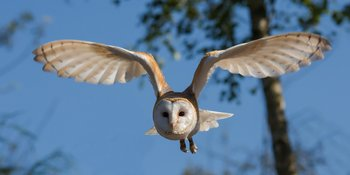 Xl barn owl 1107397 1920